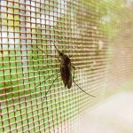 facts about malaria malaria blog image