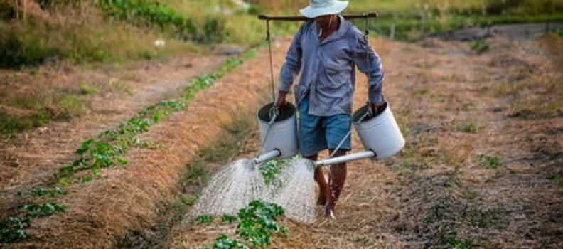 Climate Change and Small Holder Farmers in Africa