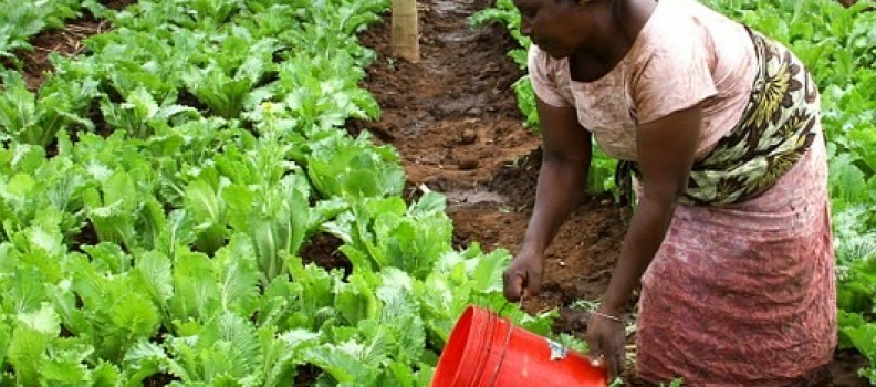 Advantech to support AGRA in key ICT4Ag interventions in Africa.