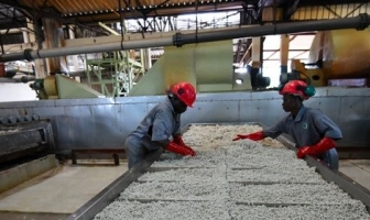 Why Africa must shift from dependence to diversification, now